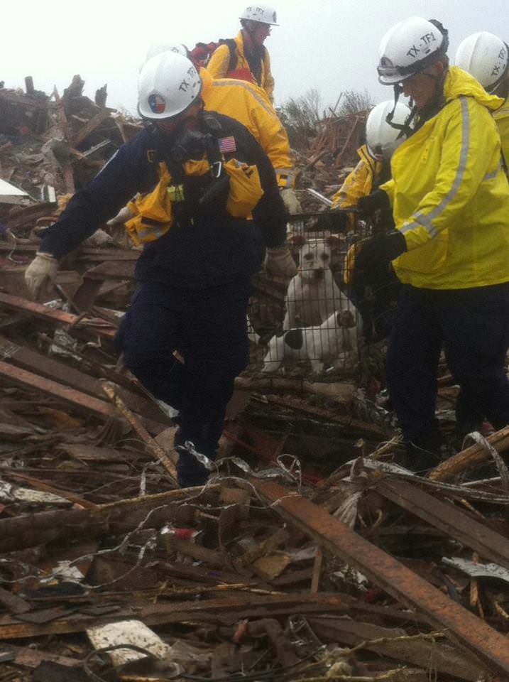 rescuers pull out dog in cage